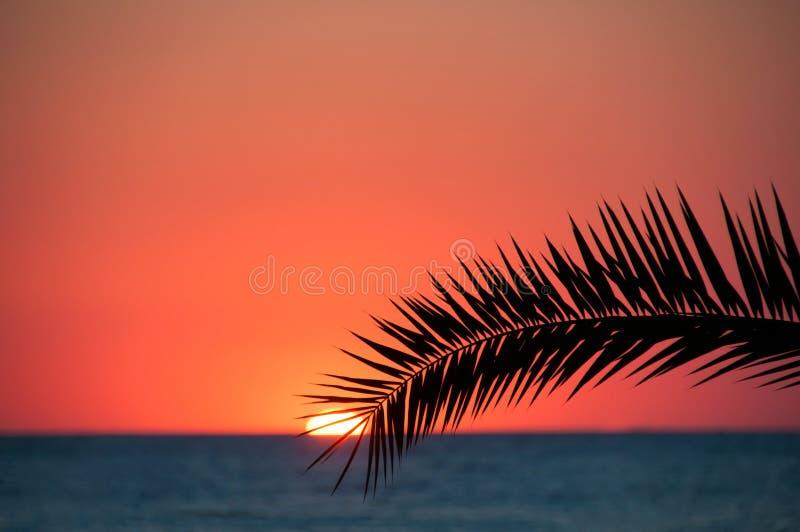 Sonnenuntergangstrand, Meer glättend, Palmen lizenzfreie stockbilder