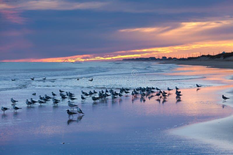 Sonnenuntergangstrand-Seemöwen äußere Banken OBX NC USA lizenzfreie stockbilder