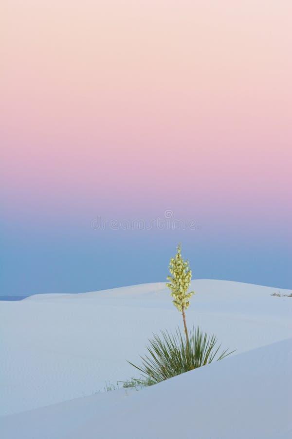 SonnenuntergangYucca, vertikal lizenzfreies stockfoto