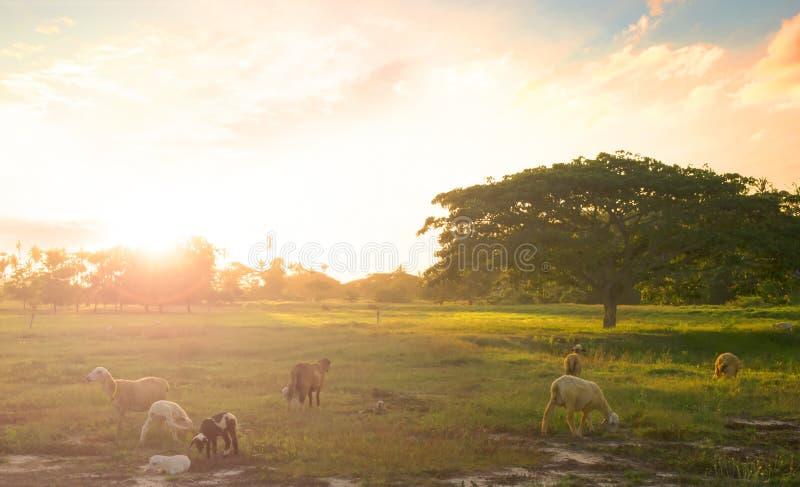 Sonnenuntergangzeit auf dem Berg mit großem Baum und Vögeln lizenzfreie stockfotos