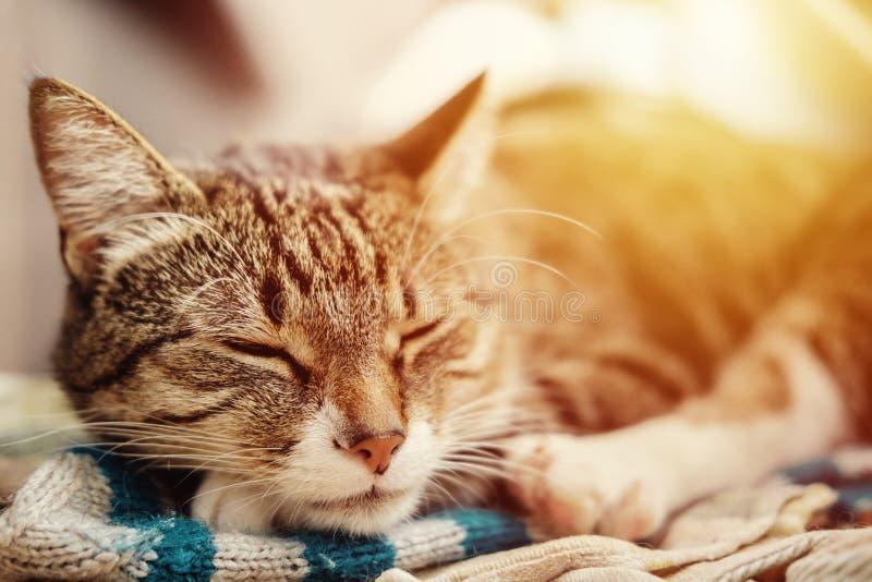 Sonni dolci del bello gatto, tramonto fotografie stock
