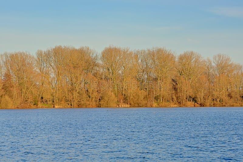 Sonnige bloße Bäume und Sträuche entlang Fluss Schelde in der flämischen Landschaft stockbild