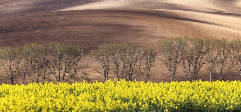 Sonnige Hügel mit Feldern, Bäumen und Rapssamenblumen lizenzfreie stockbilder