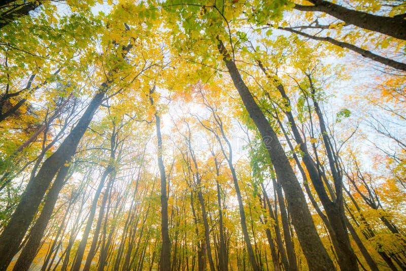 Sonnige Herbstlandschaft lizenzfreies stockbild