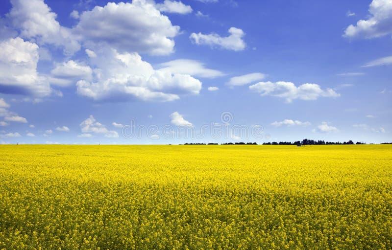 Sonnige Landschaft stockbild