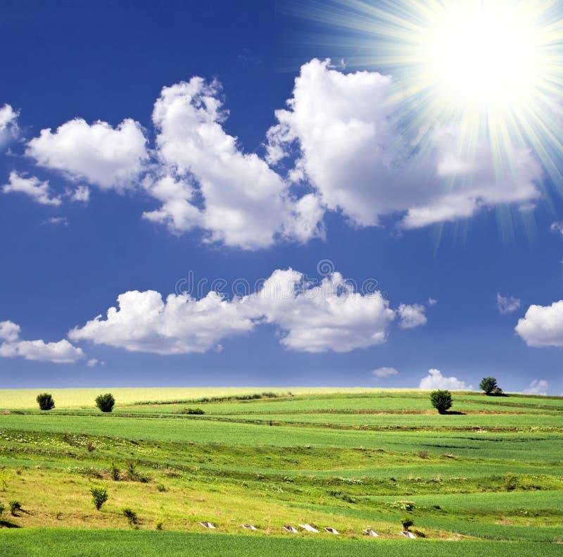 Sonnige Sommerlandschaft Stockfoto