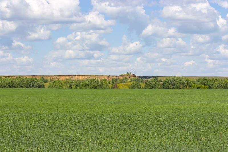 Sonnige Sommerlandschaft, grünes Weizenfeld, bewölkter Himmel, Sandgrube auf dem Horizont stockfoto