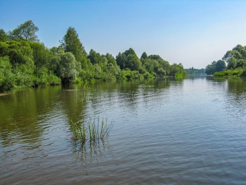 Sonnige Sommerlandschaft mit einem Fluss Der Fluss in der Kaluga-Region von Russland Ruhiger sonniger Tag ruhe Wolkenloser blauer stockfoto