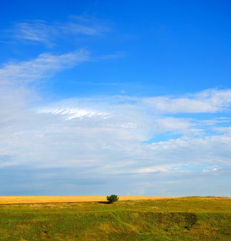 Sonnige Sommerlandschaft mit einsamer wachsender Kiefer auf einem Hintergrundod des bewölkten Himmels stockfotos