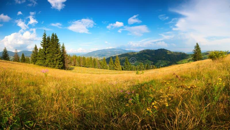 Sonnige Sommerlandschaft Sommerhügel von Karpaten mit Wildflowers stockbilder