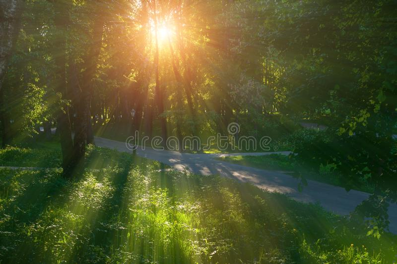 Sonnige Sommerlandschaft - Sommerparkgasse bei Sonnenuntergang stockfotos