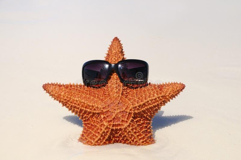 Sonnige Starfish lizenzfreie stockfotografie