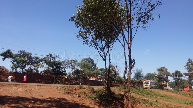 Sonnige Straße des einsamen Straßenrandbaums lizenzfreies stockbild