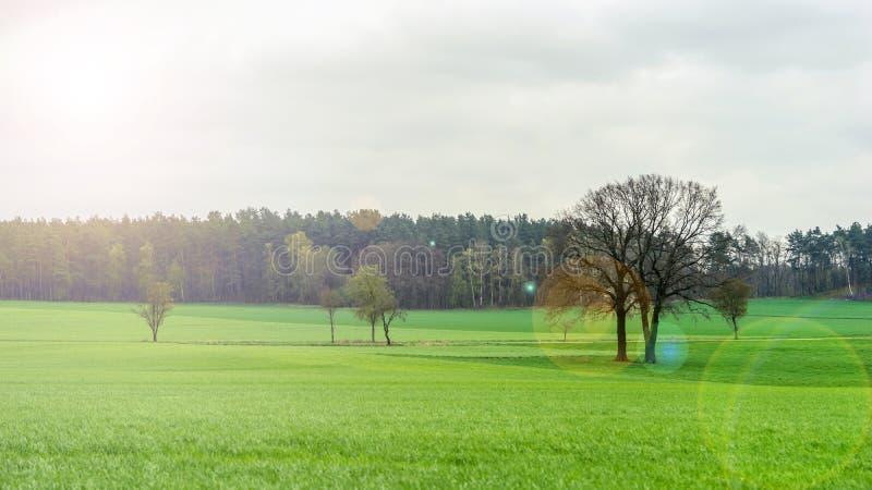 Download Sonnige Wiese stockfoto. Bild von landwirtschaft, baum - 90229894