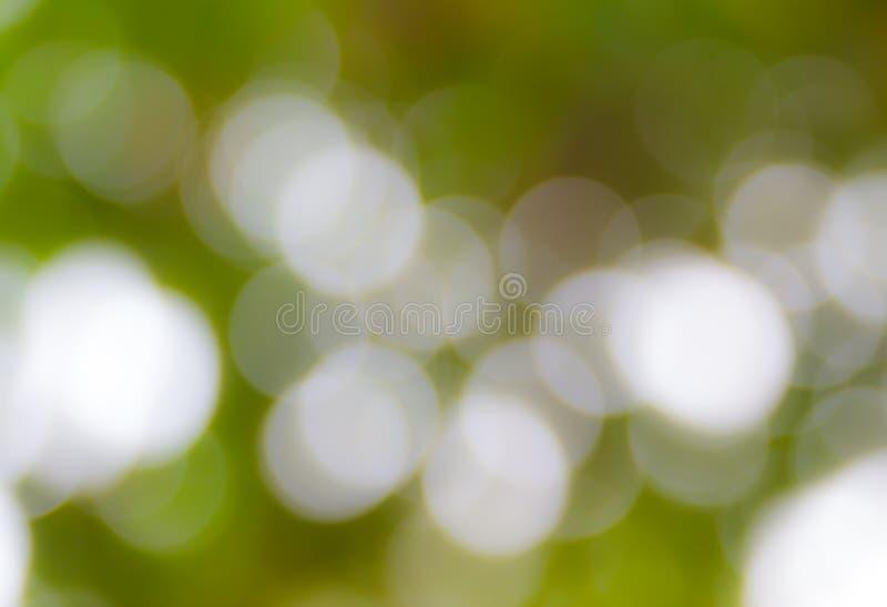 Sonniger abstrakter grüner Naturhintergrund, selektiver Fokus stockbild