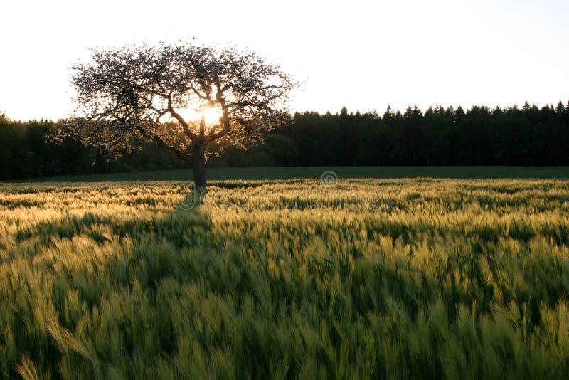 Sonniger Baum stockfotos