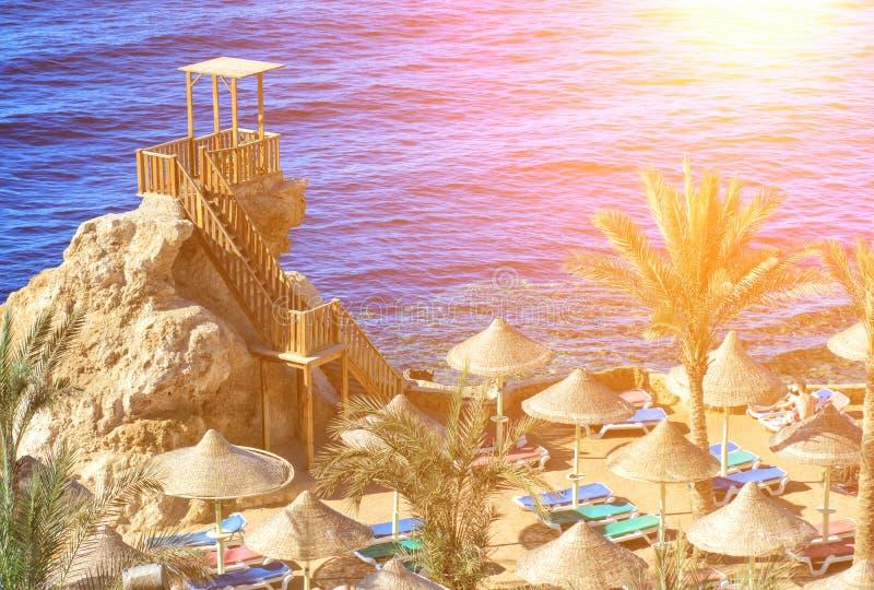 Sonniger Erholungsortstrand mit Palme am Küstenufer von Rotem Meer im Sharm el Sheikh, Sinai, Ägypten, Asien im Sommer heiß Helle stockfotos