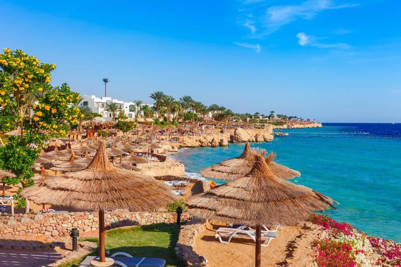 Sonniger Erholungsortstrand mit Palme am K?stenufer von Rotem Meer im Sharm el Sheikh, Sinai, ?gypten, Asien im Sommer hei? Helle lizenzfreie stockbilder