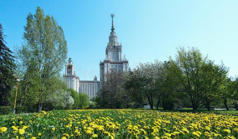 Sonniger gelber Löwenzahn im Campus der berühmten russischen Universität in Moskau lizenzfreie stockfotografie