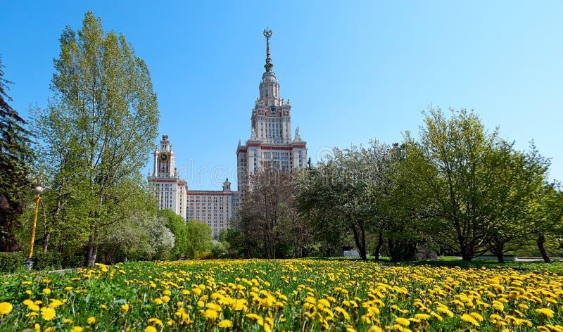 Sonniger gelber L?wenzahn im Campus der ber?hmten russischen Universit?t in Moskau stockbilder