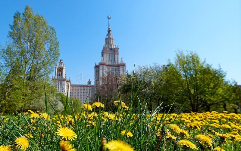 Sonniger gelber L?wenzahn im Campus der ber?hmten russischen Universit?t in Moskau lizenzfreies stockbild