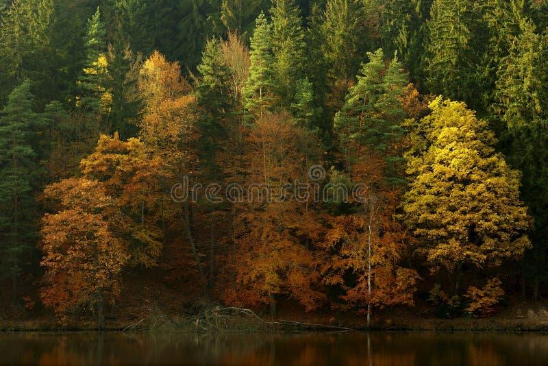 Sonniger Herbst stockfoto
