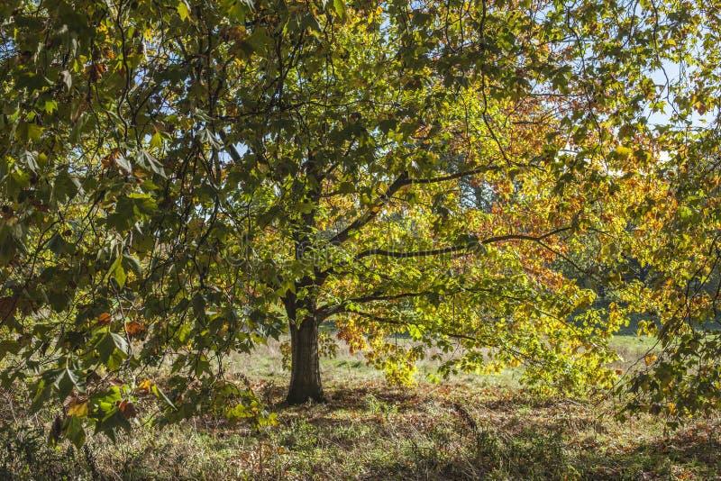 Sonniger Herbst - London, 2018, bunte Blätter stockfoto