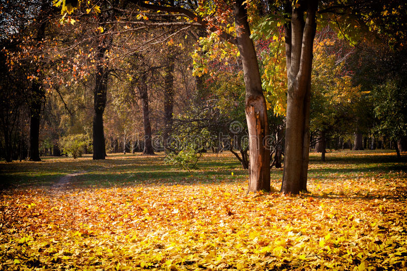 Sonniger Herbsttag stockfotografie