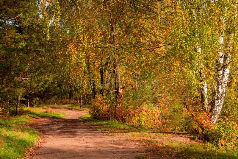Sonniger Herbsttag, Ansicht des Weges im Wald stockbild
