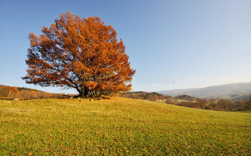 Sonniger November stockbild