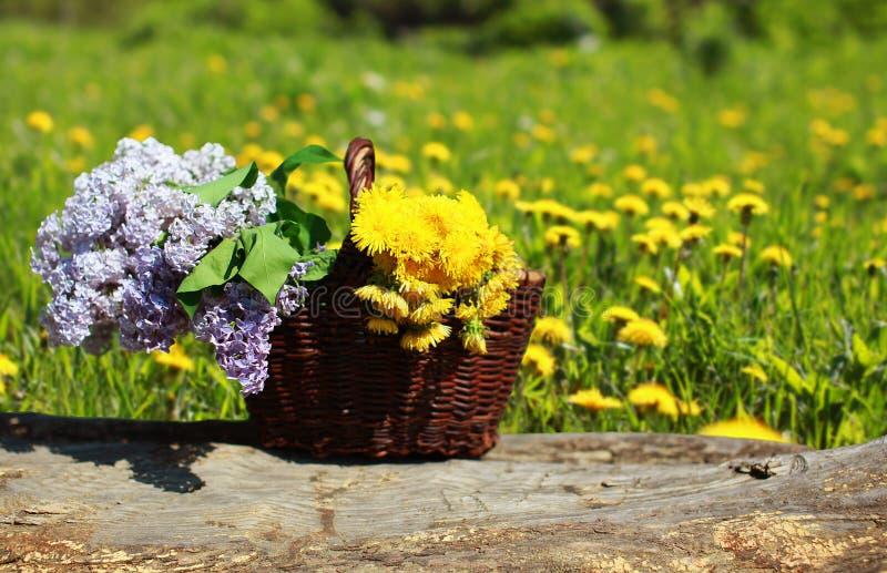 Sonniger Sommerhintergrundkorb mit gelbem Löwenzahn und Fliedern lizenzfreie stockfotos
