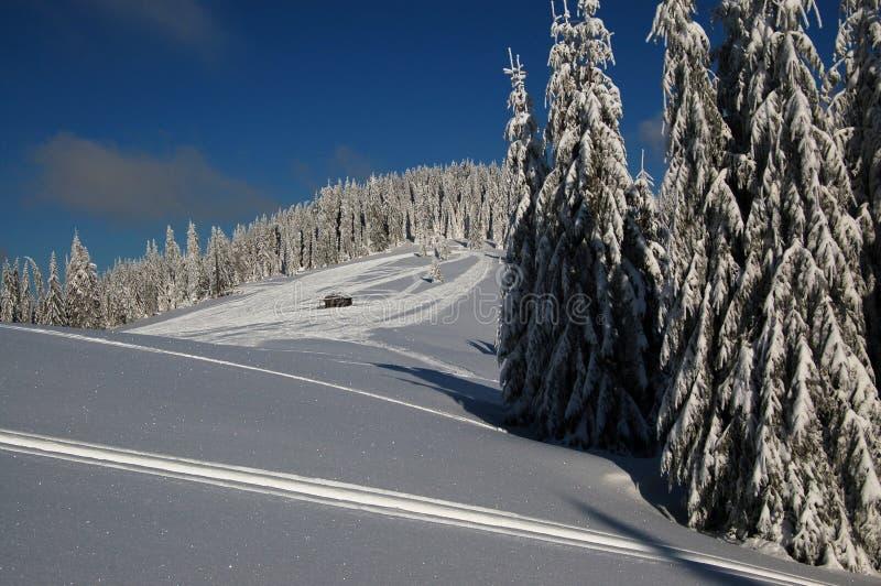 Sonniger Tag auf Osteuropa-Berg lizenzfreie stockfotos