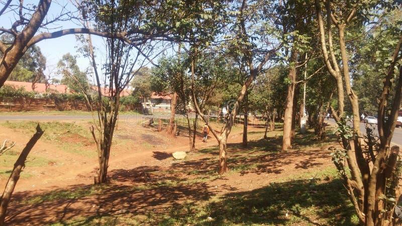 Sonniger Tag Bäume miti in Nairobi stockfoto