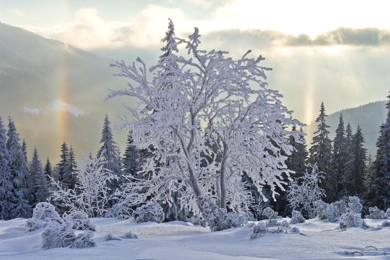 Sonniger Tag in den Winterbergen stockbild