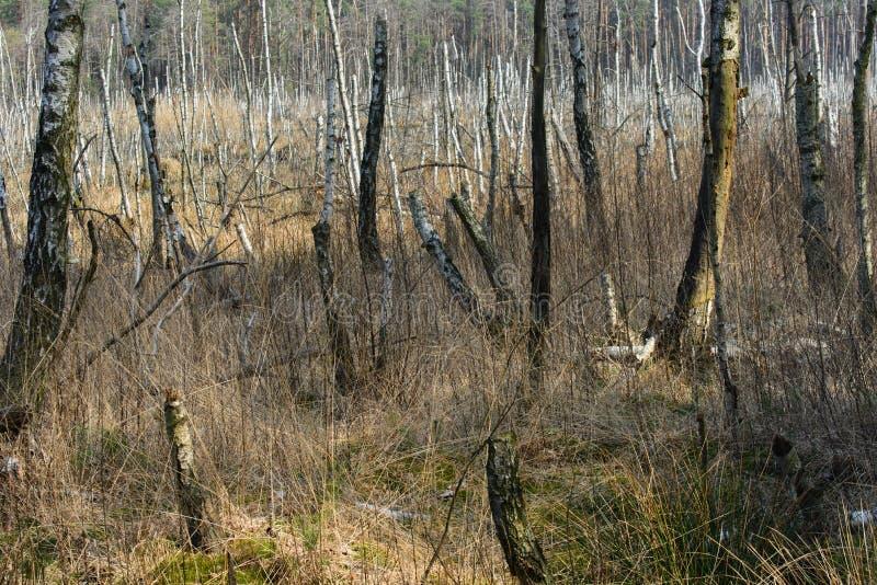 Sonniger Tag der Sumpfgebietlandschaft stockfoto
