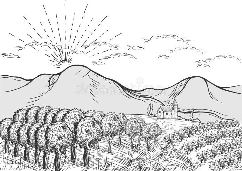 Sonniger Tag der Weinberglandschaft eine lizenzfreie abbildung