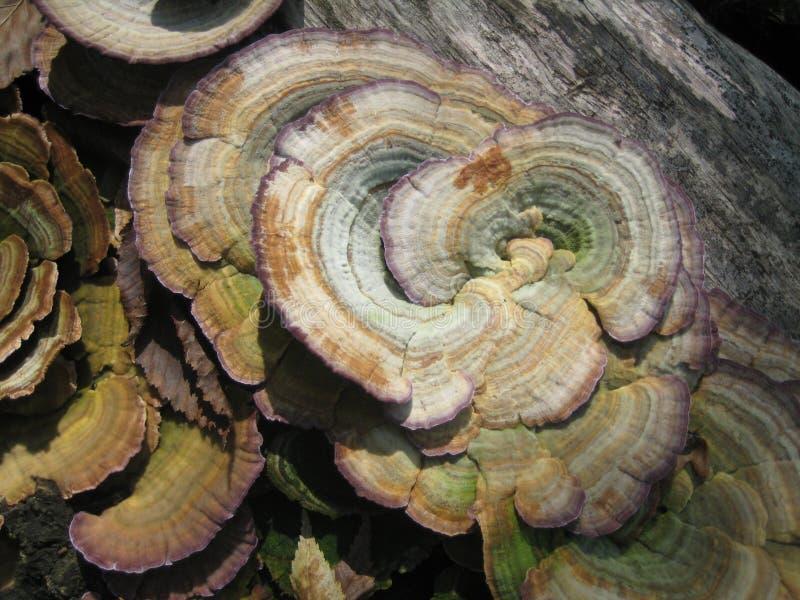 Sonniger Tag des Sommers Pilze im Wald stockbild