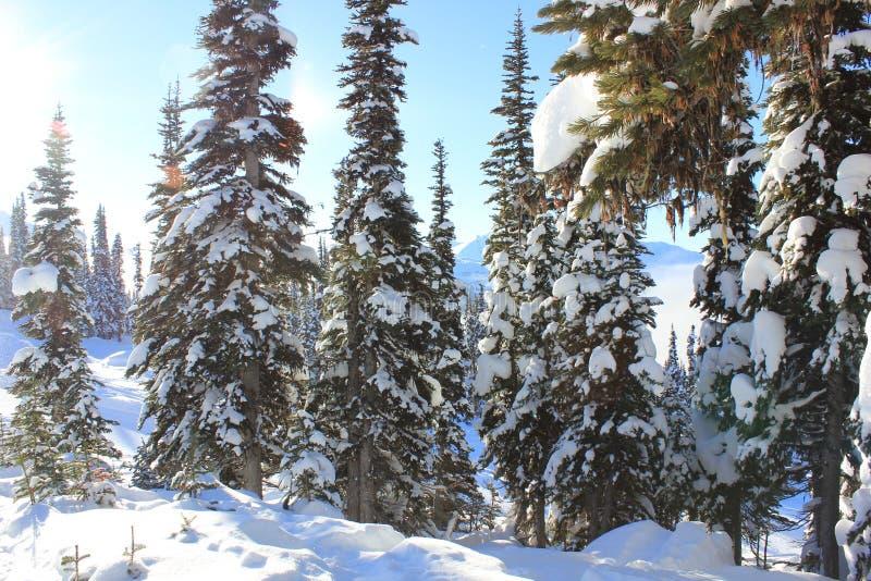 Sonniger Tag in einem M?rchenland des verschneiten Winters stockfotos