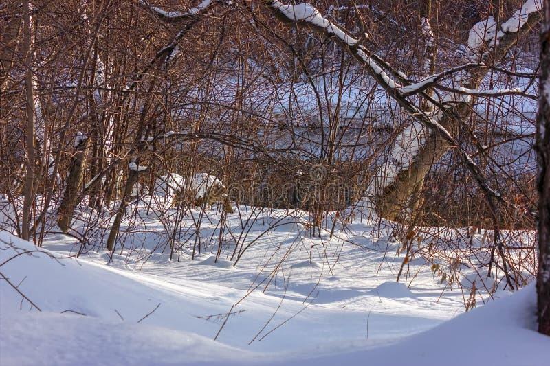 sonniger Tag im Doppel-iSO-Foto des verschneiten Winters Wald lizenzfreie stockfotografie