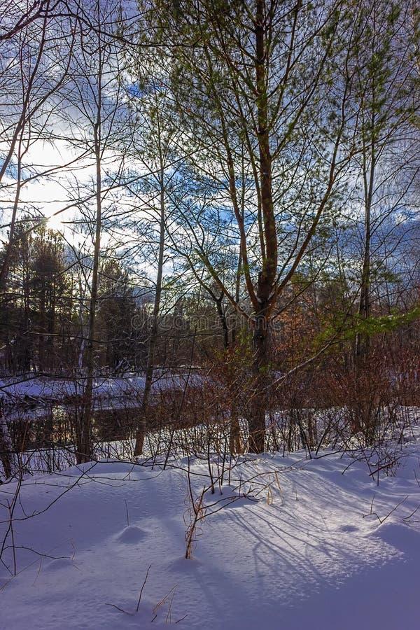 sonniger Tag im Doppel-iSO-Foto des verschneiten Winters Wald lizenzfreies stockbild