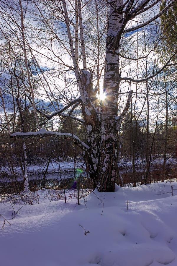 sonniger Tag im Doppel-iSO-Foto des verschneiten Winters Wald lizenzfreie stockbilder