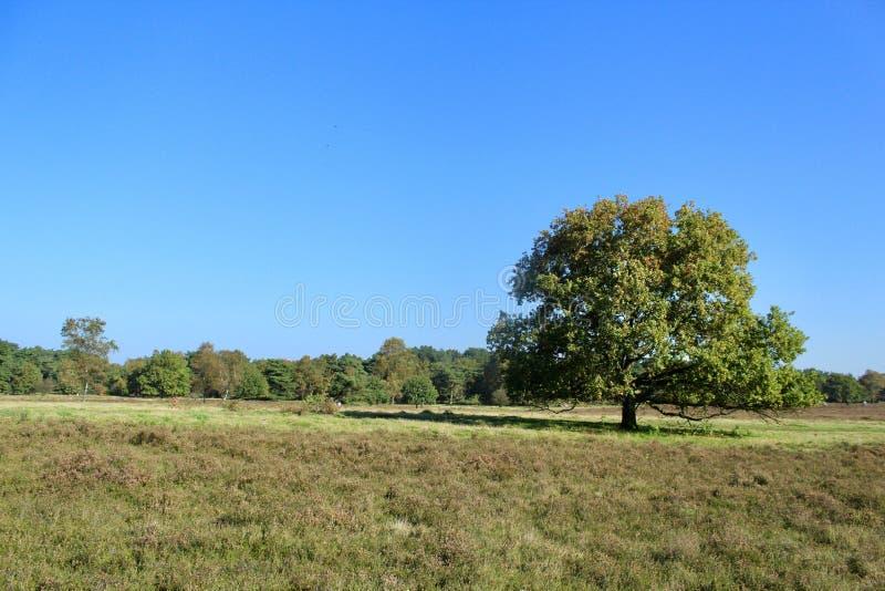 Sonniger Tag und blauer Himmel stockfotos