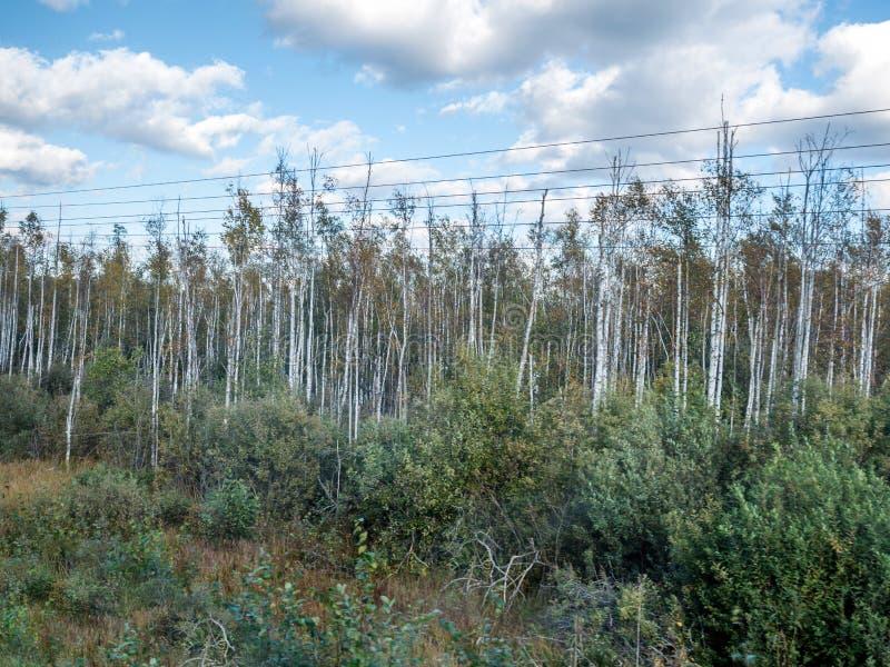 Sonniger Tagesansicht der litauischen Landschaft durch das Zugfenster, das von den visaginas nach Vilnius Litauen reist stockfoto