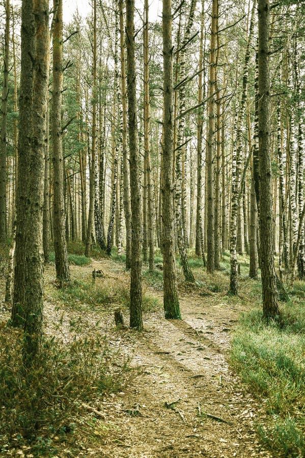 Sonniger Wald stockbilder