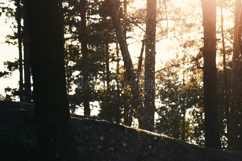 Sonniger Wald mit einem Schnee lizenzfreie stockfotografie