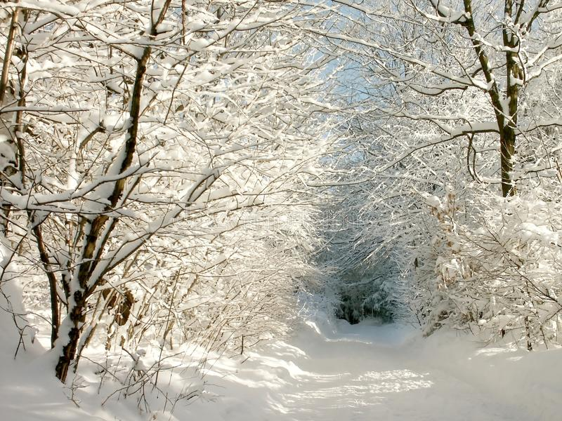 Sonniger Winterpfad stockbild