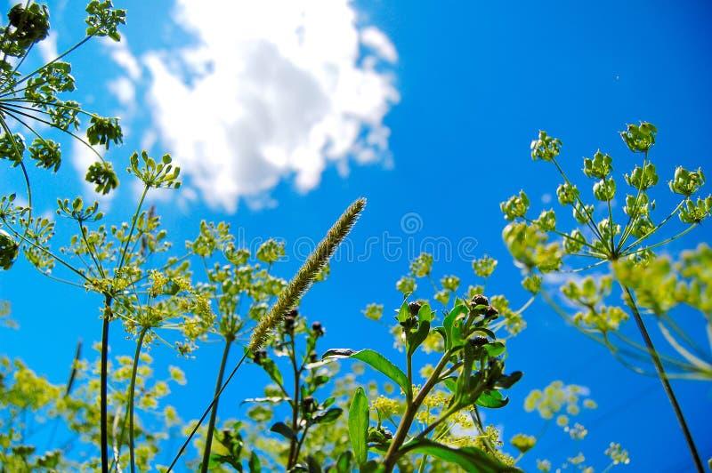 Sonniges Gras und Anlagen stockfoto