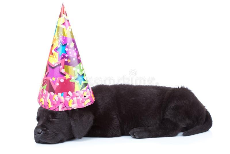 Sonno del cane del partito immagini stock