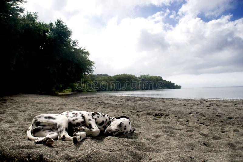 Sonno del cane della spiaggia fotografia stock libera da diritti