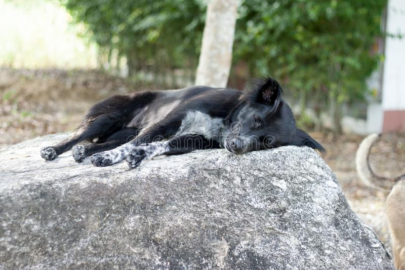 Sonno del cane nero immagini stock libere da diritti